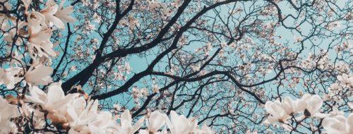 printemps detox conseils